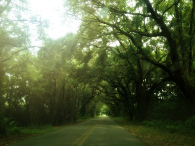 Oak-lined street in Fairhope.